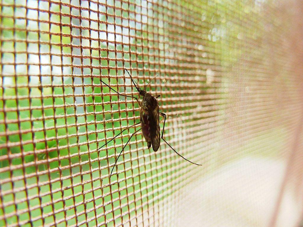 Malaria Statistics - Prevention