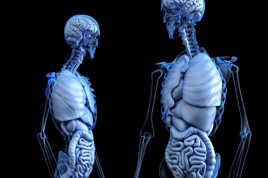 Organ Donation Statistics - Liver