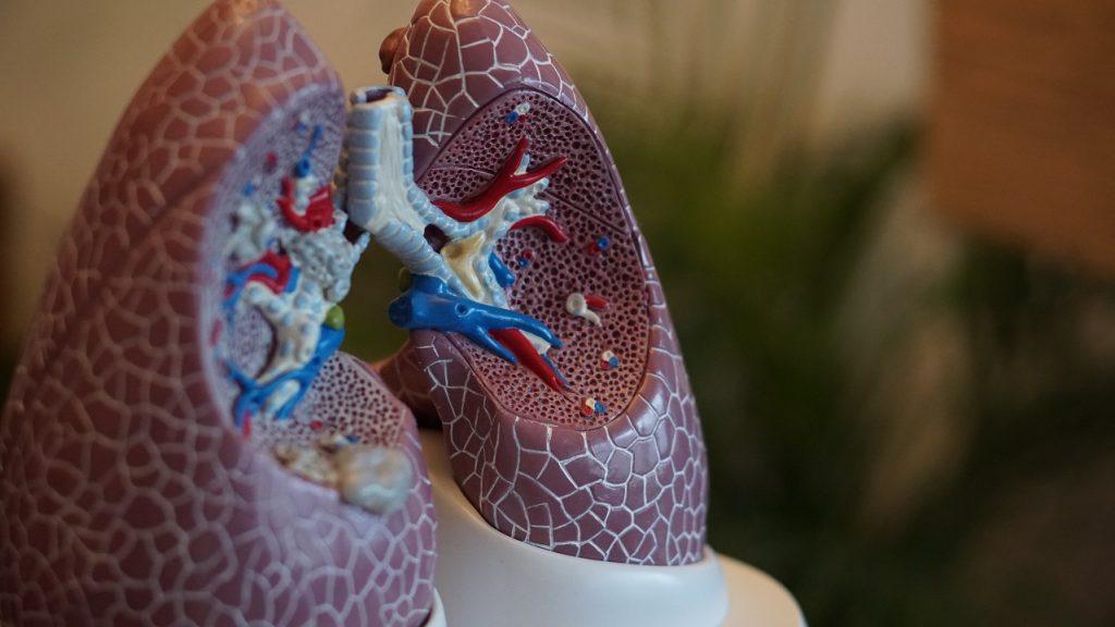 Organ Donation Statistics - Lungs
