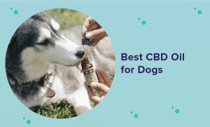 The Best CBD Oil for Dogs in 2020 (Reviews & Buying Guide)