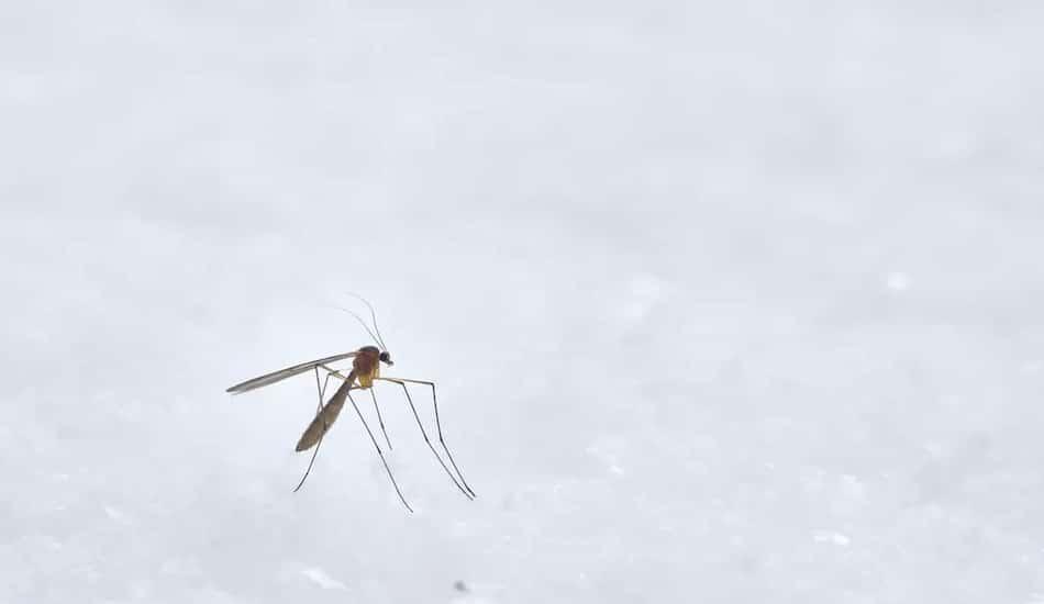 Malaria Statistics