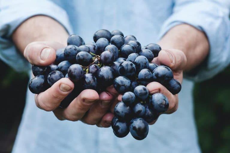Resveratrol Benefits