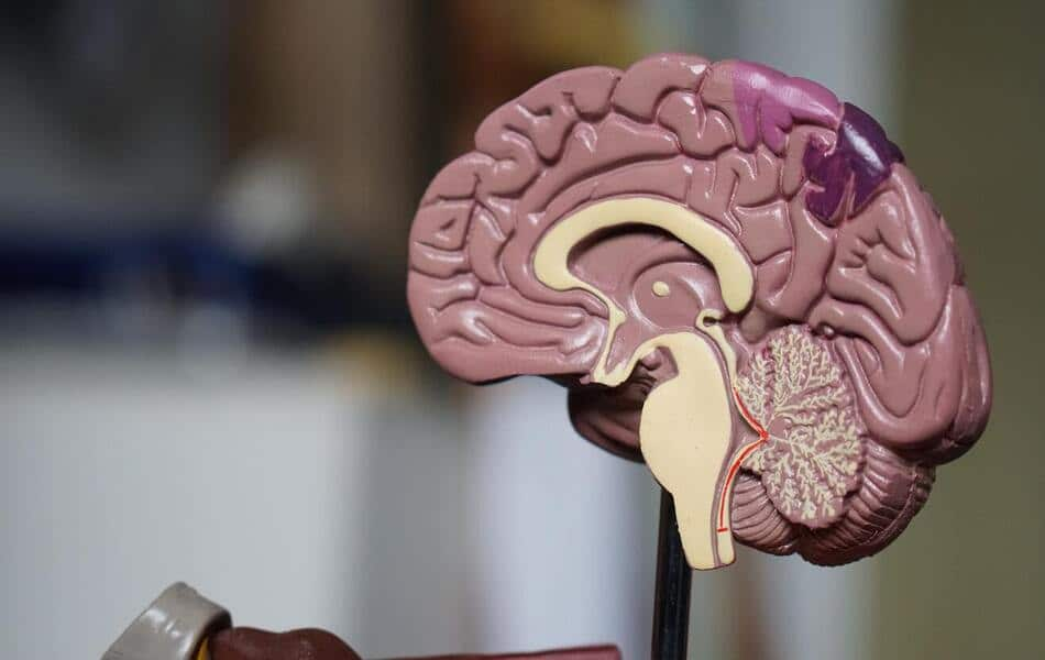 Researchers Find a Circuit in the Brain That Might Help Fight Obesity